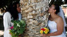 Frauen geben Bäumen das Ja-Wort. Das steckt hinter der Aktion!