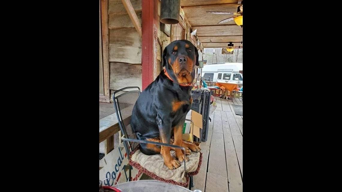 NC country store owner hid video of Rocky the Rottweiler attacking man, sheriff says