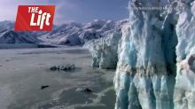 Why are icebergs being taken to Dubai?