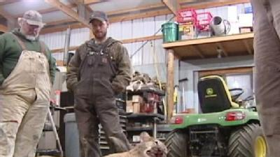 Man Shoots Mountain Lion On Area Farm