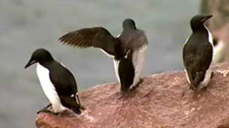 Lack of patrol putting seabirds at risk, advocate warns