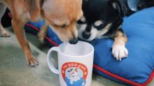 Check out America's first dog cafe — coffee with a side of cuddles