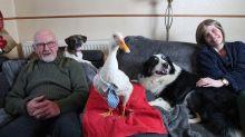 Ungewöhnliches Haustier: Diese Ente begeistert auch die Kirchengemeinde