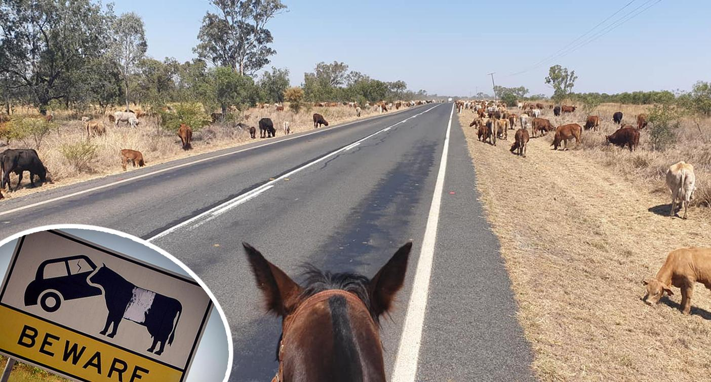 Emotional plea to rural motorists after 'un-Australian' act by truck driver