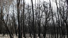 Tragedy of bushfires cloud Australia Day celebrations