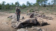 Can modern technology save rhinos from poachers?