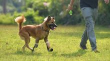 Blade running Thai dog gets new lease of life