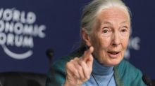Jane Goodall's 'The Book of Hope' coming out in 2021