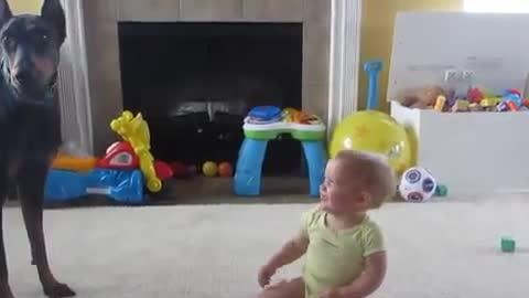 Adorable Baby Plays With Doberman Dog