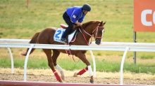 Japanese stayers ready for Cup challenge