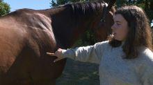 Investigan en Francia misteriosas mutilaciones de caballos