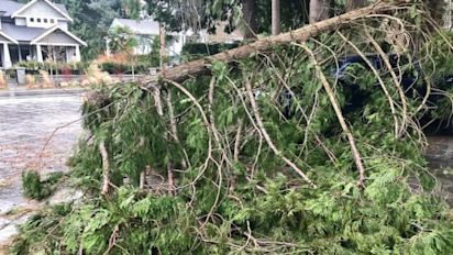 Strong B.C. winds cause 'significant damage'