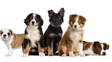 It's National Puppy Day! Here's What You Need To Know About Those Oh-So-Cute Canines