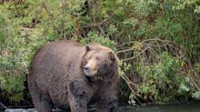 Hibernation Works for Bears. Could It Work for Us, Too?