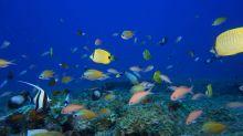 World isn't meeting biodiversity goals, UN report finds