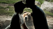 Tierische Fotobombe: Emotionaler Bär wird zum Stargast einer Hochzeit