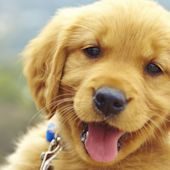 Yes, Your Dog Can Understand Exactly What You're Saying