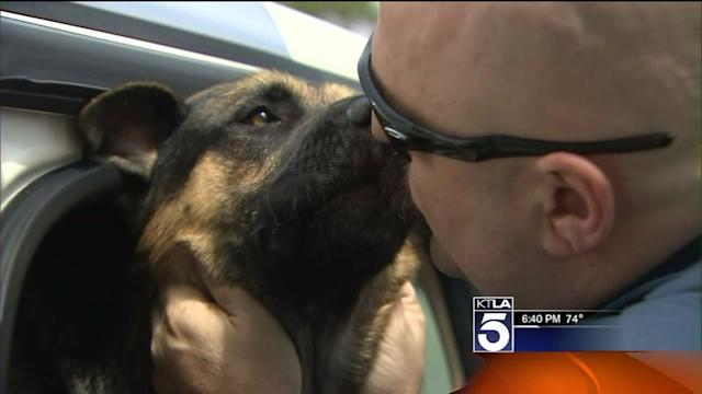 Stolen Service Dog Trained to Work With Disabled Vets Found Badly Injured