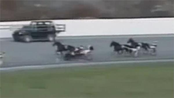 Driver trampled by horse at Harrah's racetrack in Chester