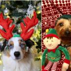 The most festive dogs of 2018 (for a very good cause)