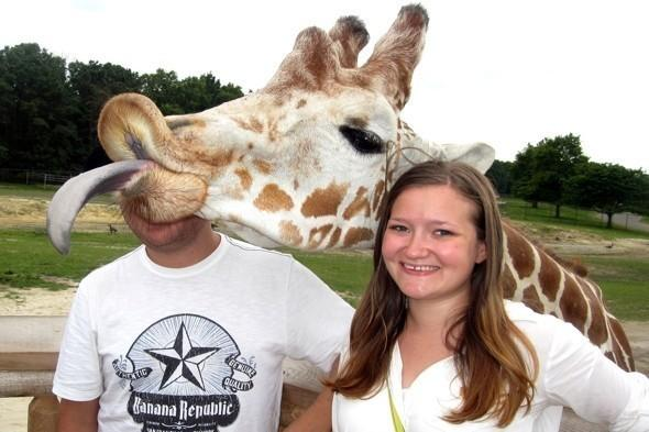 <p>Conan the giraffe is a regular culprit for photo bombing at Six Flags Adventure Land, New Jersey, USA. The cheeky giraffe decided to interrupt a couple's special moment by photo bombing their picture. Deirdre Mead and Jonathon Itskov were delighted with their hilarious snap.</p>  <p></p>