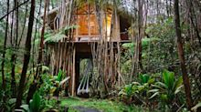A £35 Rental Is Airbnb's Most Popular Treehouse Listing In The World