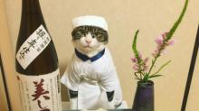 Un gatito tierno posa ante banquetes