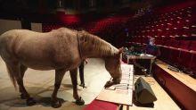 A Amiens, Luc Petton réunit des chevaux et des acrobates dans une étonnante partition musicale et numérique