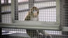 German animal testing laboratory shut down over cruelty claims may be allowed to reopen