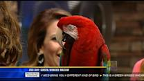 Zoo Day: Green-winged macaw