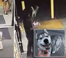 Husky Caught on Surveillance Shoplifting a Loaf of Bread, Then Returning With an Accomplice