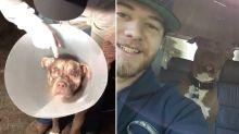 Man 'punches huge 158kg predator' to save beloved dog