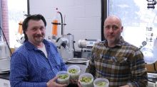 Research seeks to tap into craft-brewing potential of Maritime wild hops