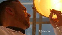 'Speed breeding' in Australia illuminates future crop possibilities