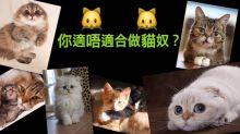 你適合做貓奴嗎?6大養貓前自我評估的重要事項