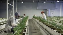 Two Canadian Companies Are Merging in the Biggest Weed Deal Ever