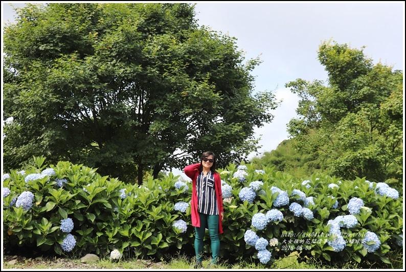 赤柯山繡球花-2018-06-16.jpg