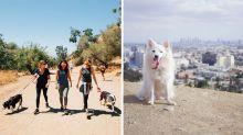 In L.A. kann man jetzt Tierheimhunde für Wanderungen mieten