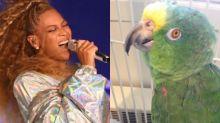 Conheça Chico, o papagaio que virou sucesso no Reino Unido ao cantar hit de Beyoncé
