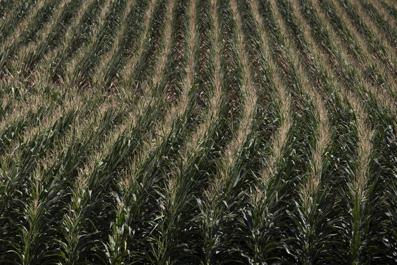 U.S. warns against planting unsolicited seeds from China