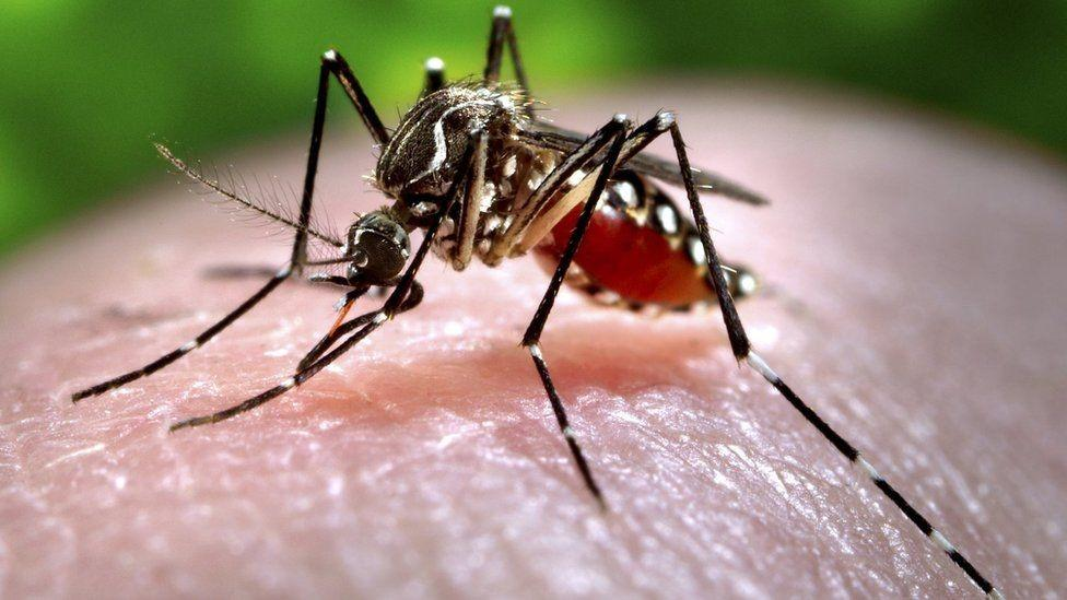 Zika virus: India's Kerala state on alert after 14 cases reported