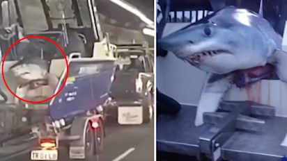Commuters spot shark hanging off back of boat
