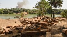 Coronavirus comes to rescue of Sierra Leone's plundered rosewood
