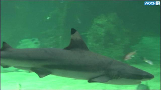 Florida Led World In Shark Attacks In 2013