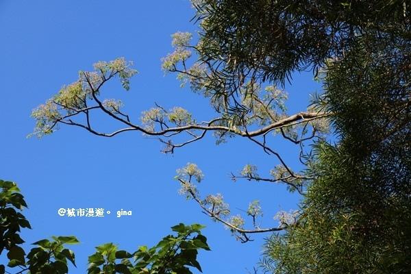 IMG_8210.JPG
