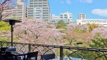 坐享美食浪漫景觀 東京七大賞櫻餐廳
