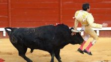 Matador gored in the buttocks after stabbing bull