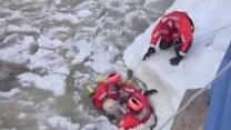 Coast Guard Rescues Dog From Icy Waters