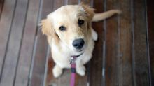 What your dog actually understands when you talk to it