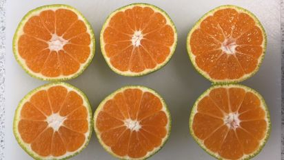 Tesco is selling green satsumas in an effort to cut food waste